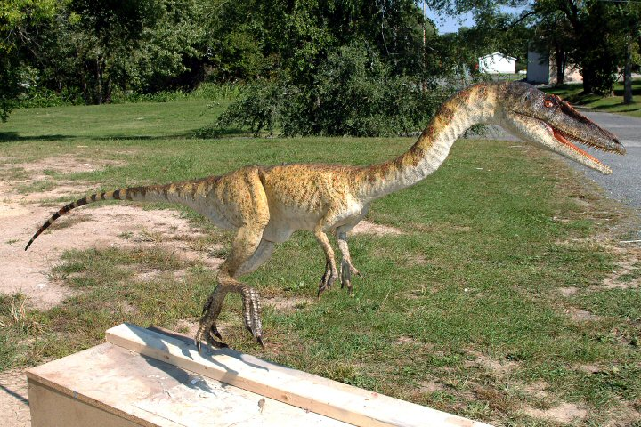 Rick Marshall's Exclusive Museum Dinosaurs (W.I.P.) Coelophysis036