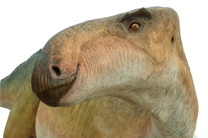 dinosaurs and man may have co existed Many christians believe that dinosaurs existed with man and some dinosaurs (and pterosaurs) may indeed have been man and dinosaurs did co-exist.