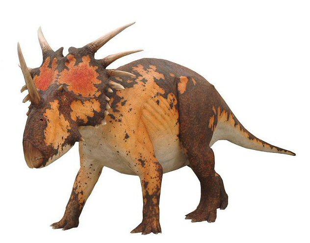 Go Back > Gallery For > Styracosaurus | 632 x 496 jpeg 53kB