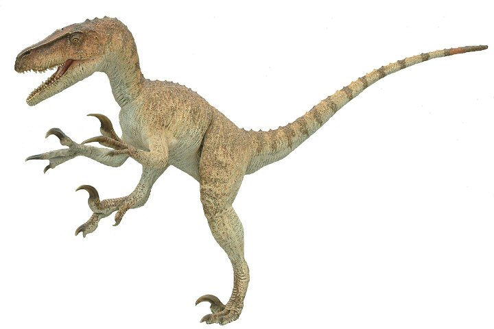 how tall is utah raptor