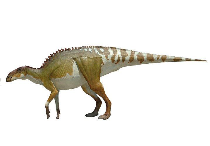 Brachylophosaurus  Leo...