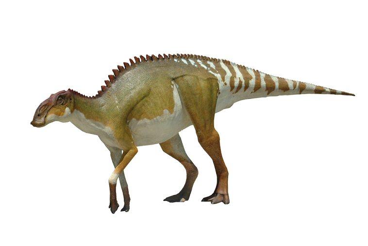 brachylophosaurus - photo #2