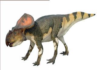 CM Studio - Life-Size Sculptures - Protoceratops