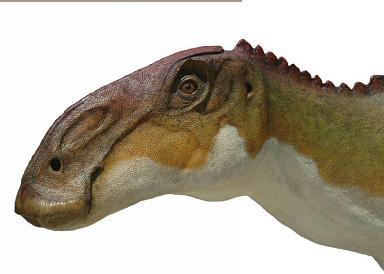 384 x 274 jpeg 15kBBrachylophosaurus