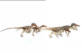 CM Studio - Velociraptor